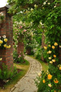 バラの小道