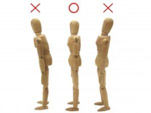 姿勢の比較模型